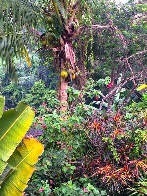 The lush view this morning from the balcony off upstairs bedroom! Dub in the sound of ducks, roosters, bird calls, and breathe in the scent of jasmine and wet earth.