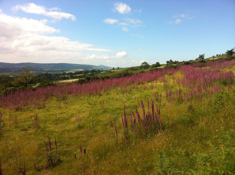 Walking the unspoiled beauty of the South Wicklow Way.