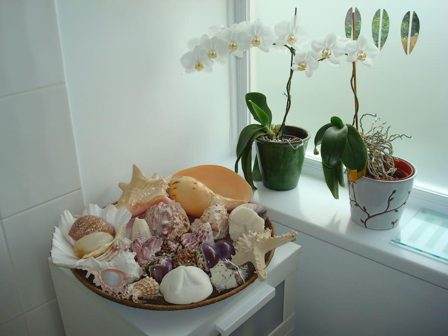 Shell basket in bathroom