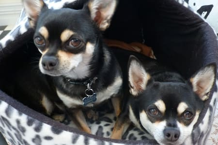 Rutherglen Dog/Pet Friendly - Rutherglen - Talo