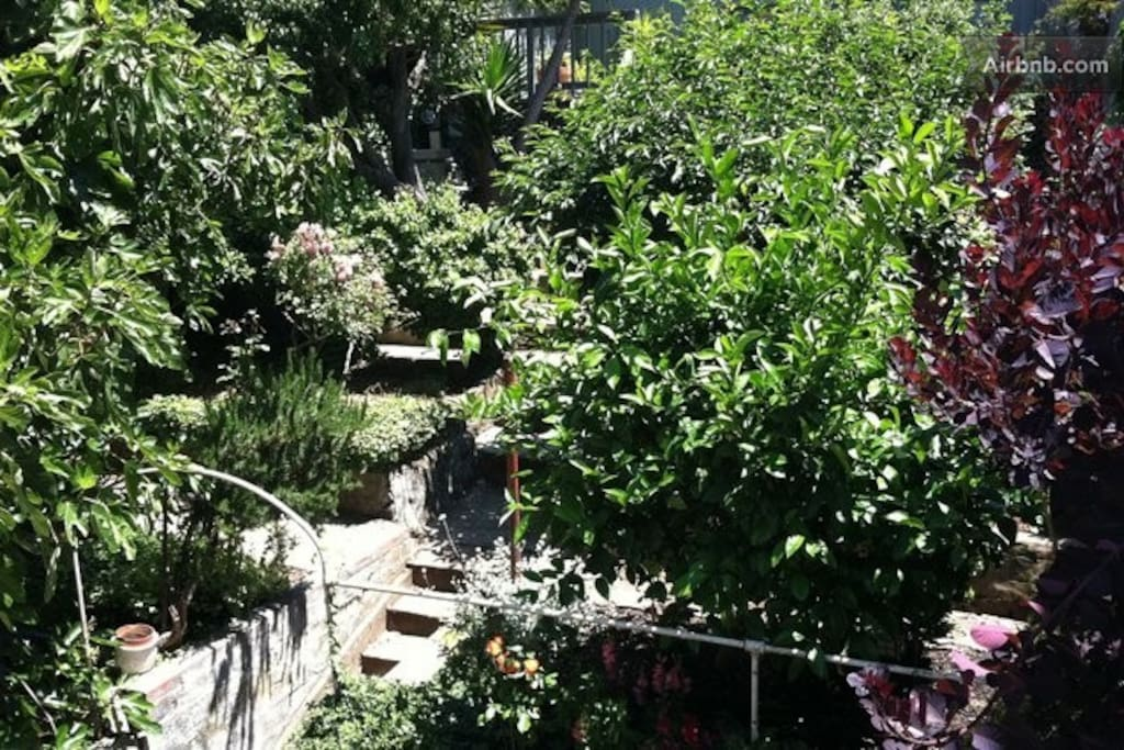 Backyard with fruit trees, roses, succulents and more (shared with one condo neighbor)