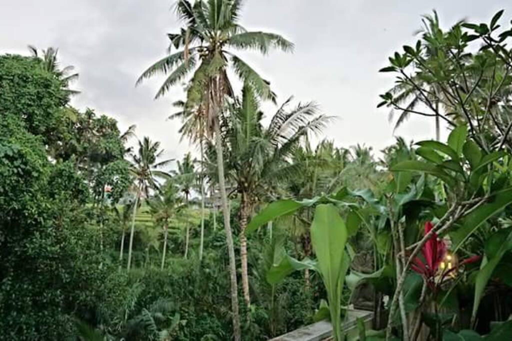Villa surrounding