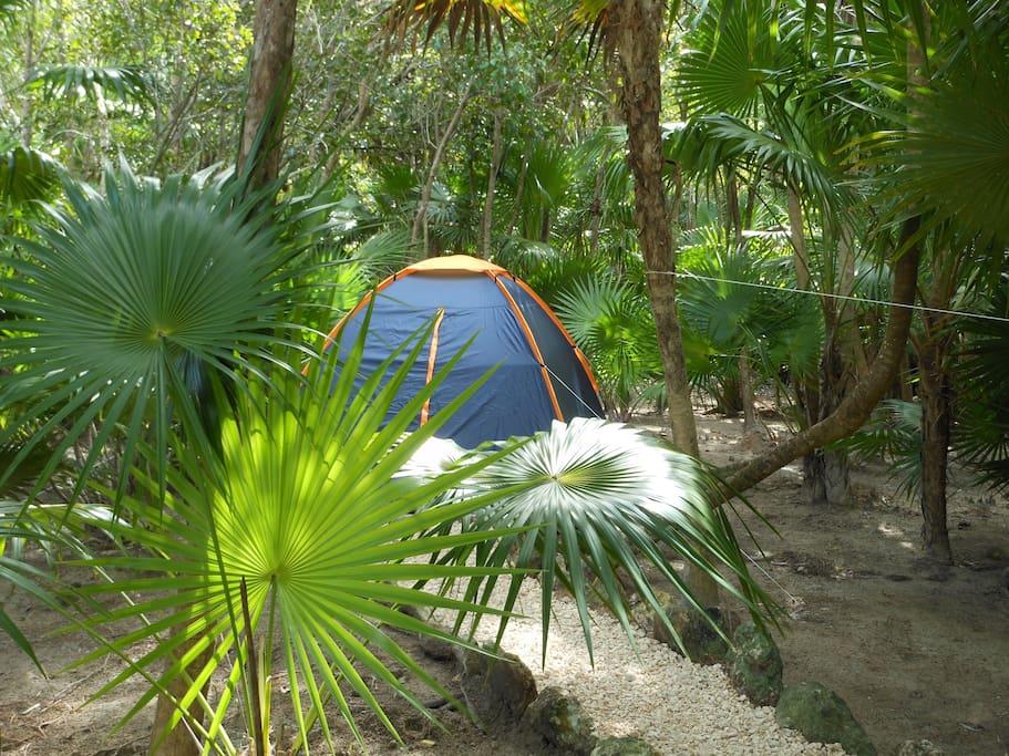 Turquesa Jungle Camping!