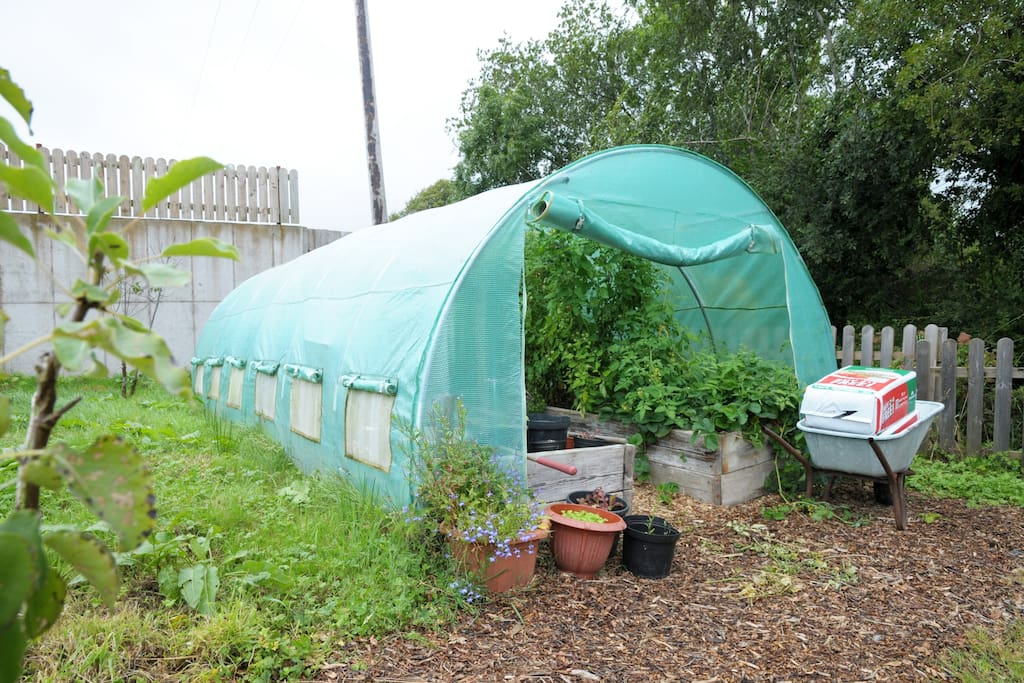 Polytunnel with fresh vegetables