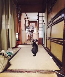 Cats&Meditation 100 years OLD house - Hus