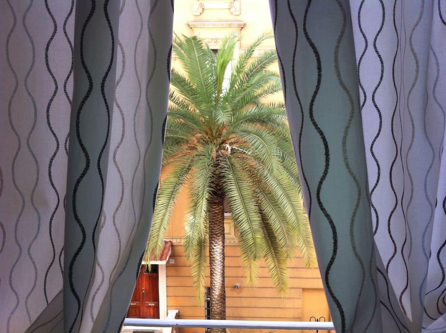 palmtree view