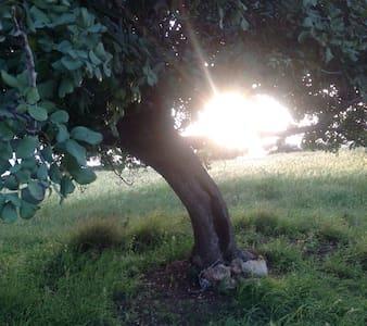 Pastoral Mediterranean Retreat - Byt