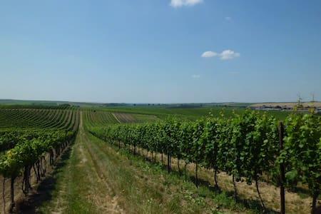 Pokoj ve vinařské obci Čejkovice - Maison