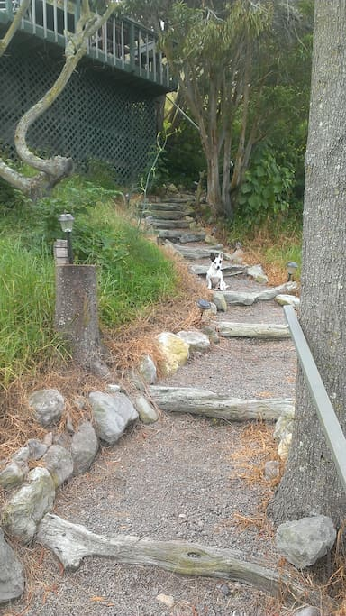 Beginning of the path with Jujubee the dog