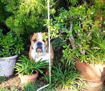 Chubbs and I welcome you! - Rumah
