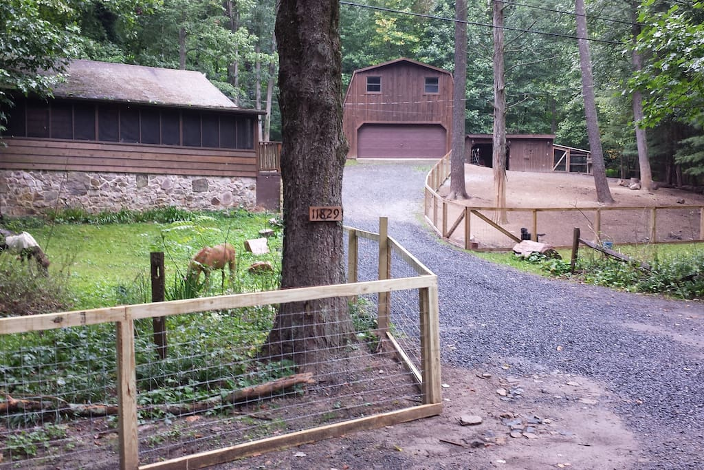 Cabin in late summer. Ponies, goats and chickens are kept within the fence.