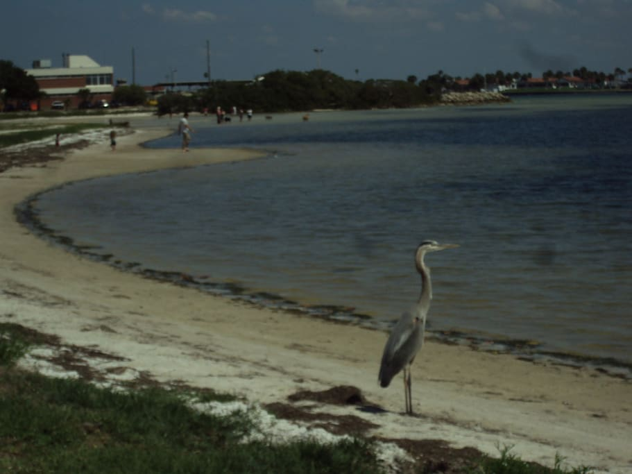 Oceanside park is a 7 minute walk.