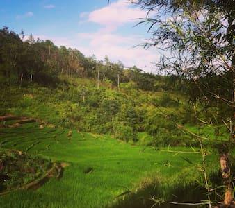 Wat and Poh's Jungle Village! - Bungalow