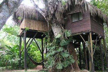 Parrot Nest Treehouse 1 - Bullet Tree Falls - Treehouse