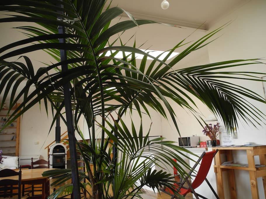 Stand-in palm, whilst the ficus is in rehab :-)