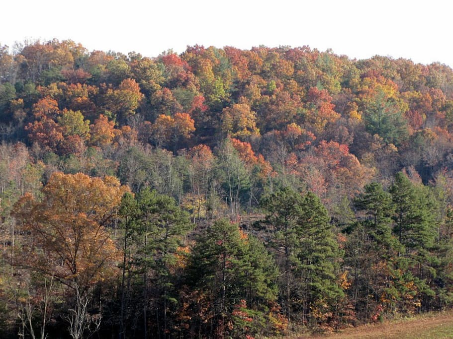 Fall Foilage Screen from our Cabin Porch