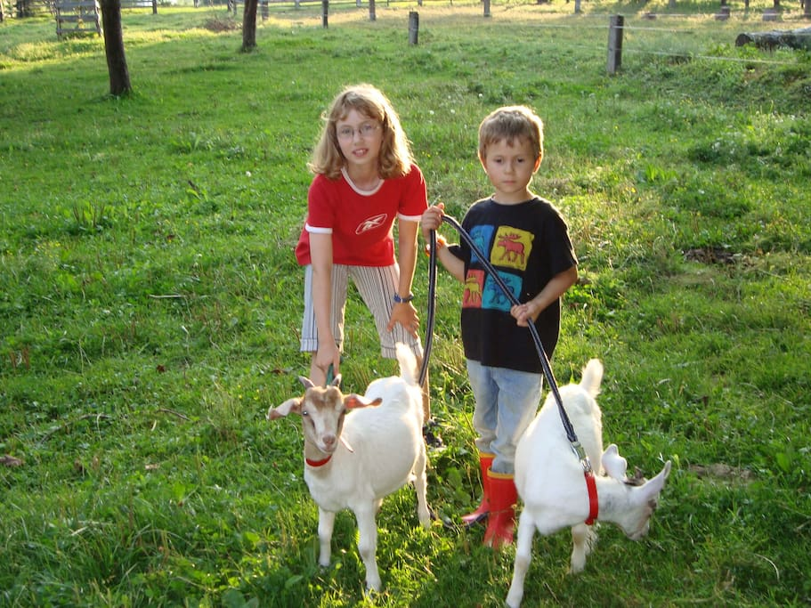 Gästekinder mit unseren Zwergziegen