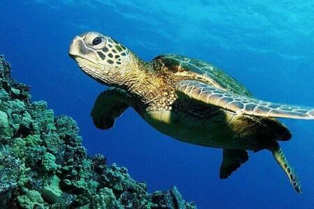 Green Turtle Cove - Pāhoa - House