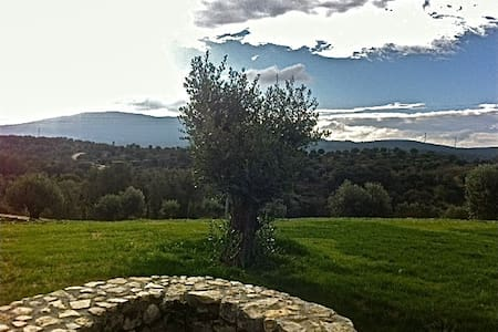 Olive Tree Room/Quarto da Oliveira - Torres Novas