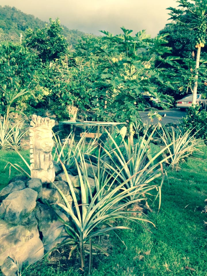 Garden area with Tiki, pineapples and coffee trees
