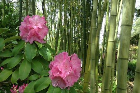 Bamboo Haven - 雷德蒙德