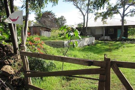LIVE A EXPERIENCE LIKE NO OTHER - Isla de Pascua - Zelt