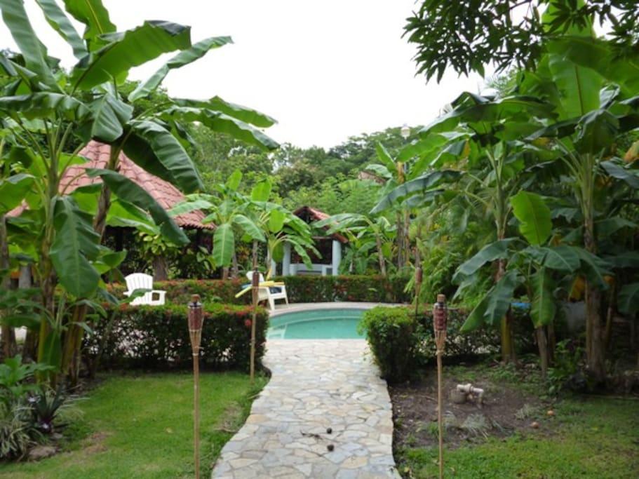 Notre piscine,Vue sur le jardin d'arbres fruitiers..