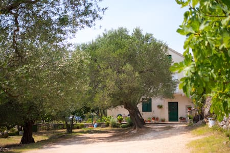 Dalmatian Estate With An Olive Grove - Jasenice