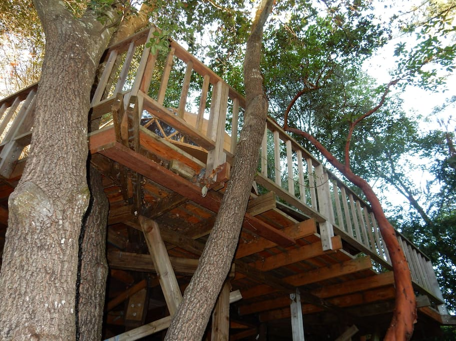You'll feel like you're in a treehouse, only it has easy access.