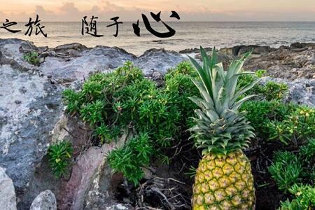 APOLO  一个·菠萝 (APK) - Kondominium
