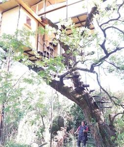 CASA SULL'ALBERO CON VISTA SUL GOLFO - Treehouse