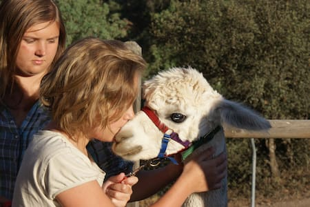 Experience Alpacas in Andalucia - Appartement