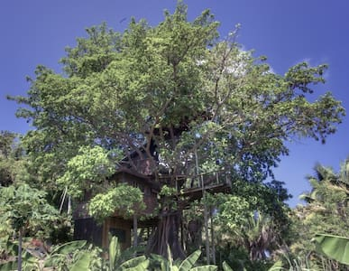 Utila Treehouse, Romantic and Lush! - Lombház