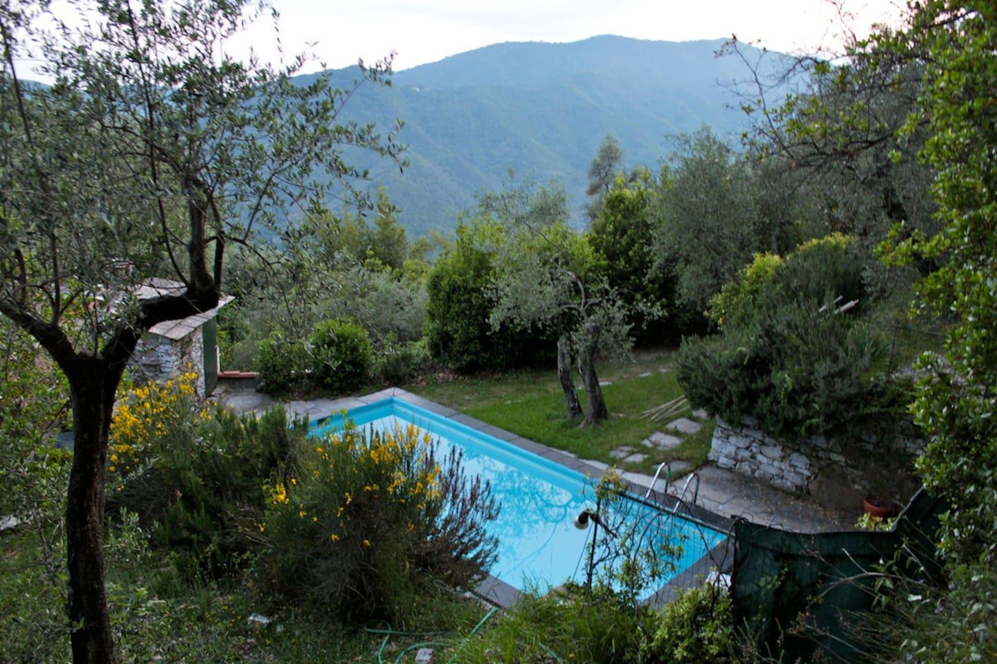 Your own private pool nestled amongst the olive trees!