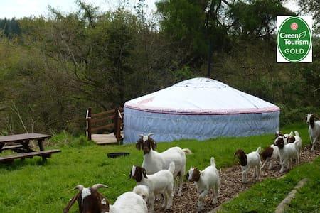Luxury yurt & private bathroom - Cookbury