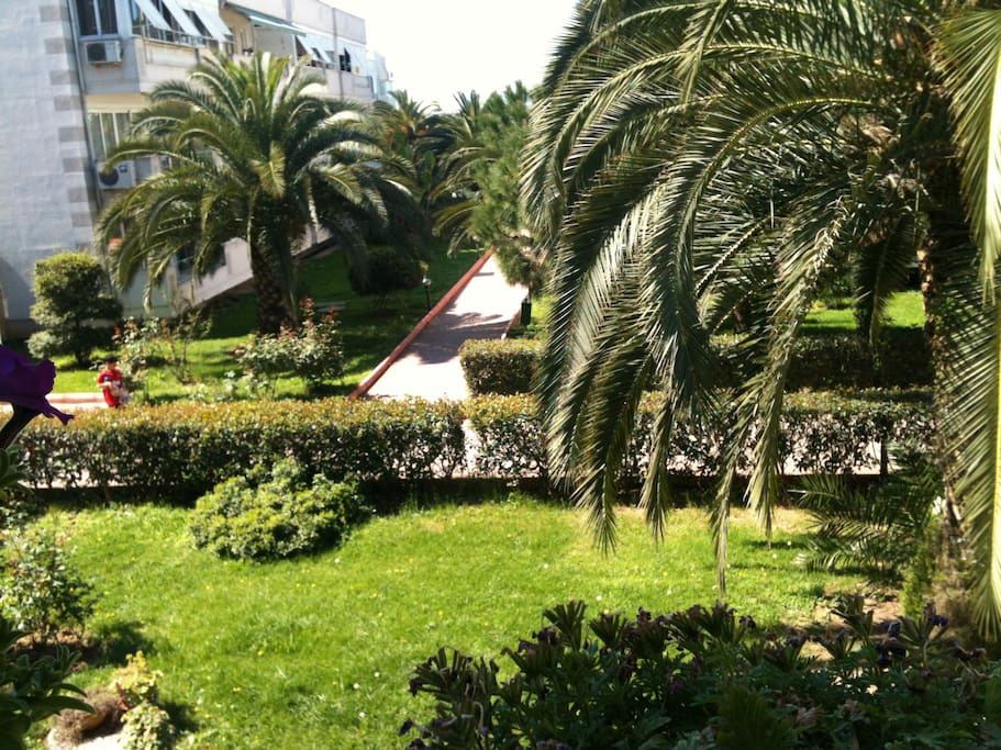 the beautiful palm trees in our garden