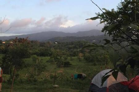 Camp on an Organic Farm 1