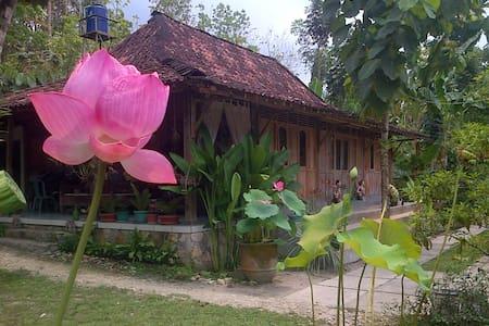 RUMAH LIMAS JOGJA : Javanese Wooden House - Yogyakarta