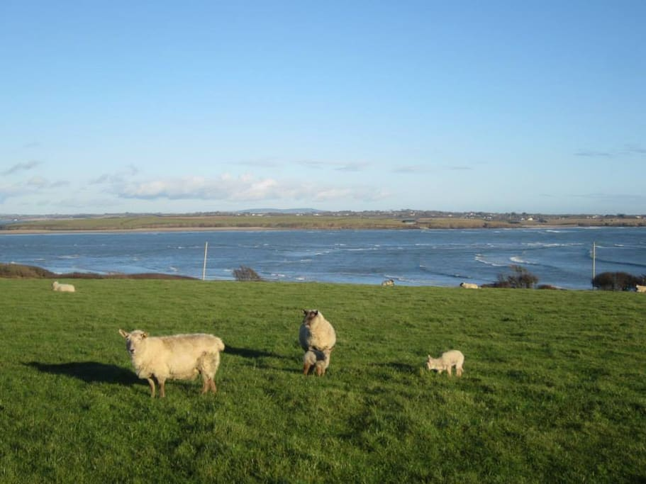 Lambing Season from January to end of February