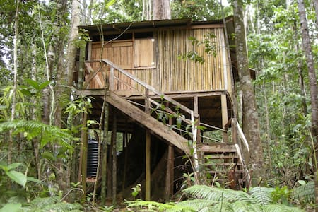 Bamboo Tree house lost in jungle