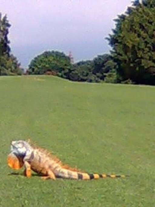 Hasta las iguanas se la pasan bien!!!