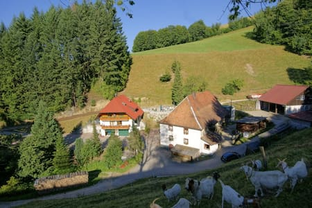 Steinmühle: Schwarzwald hautnah! - Horben