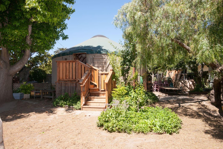 Yurt from back yard