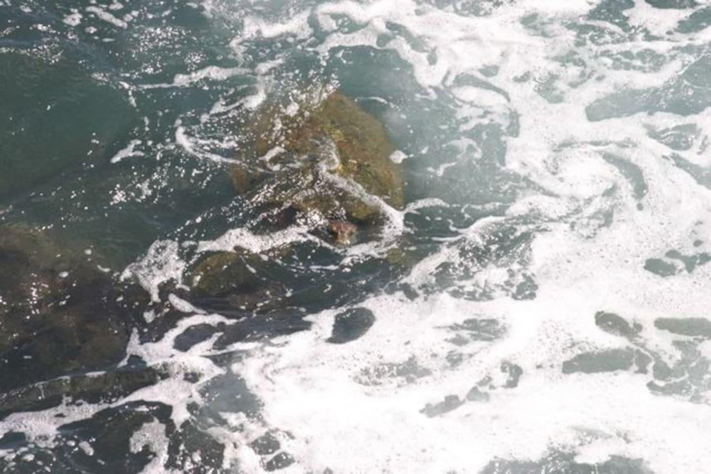 Gorgeous Ocean Front Condo, Poipu