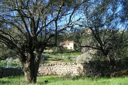 una camera spaziosa per 3/4 persone - Baia Sardinia - Bed & Breakfast