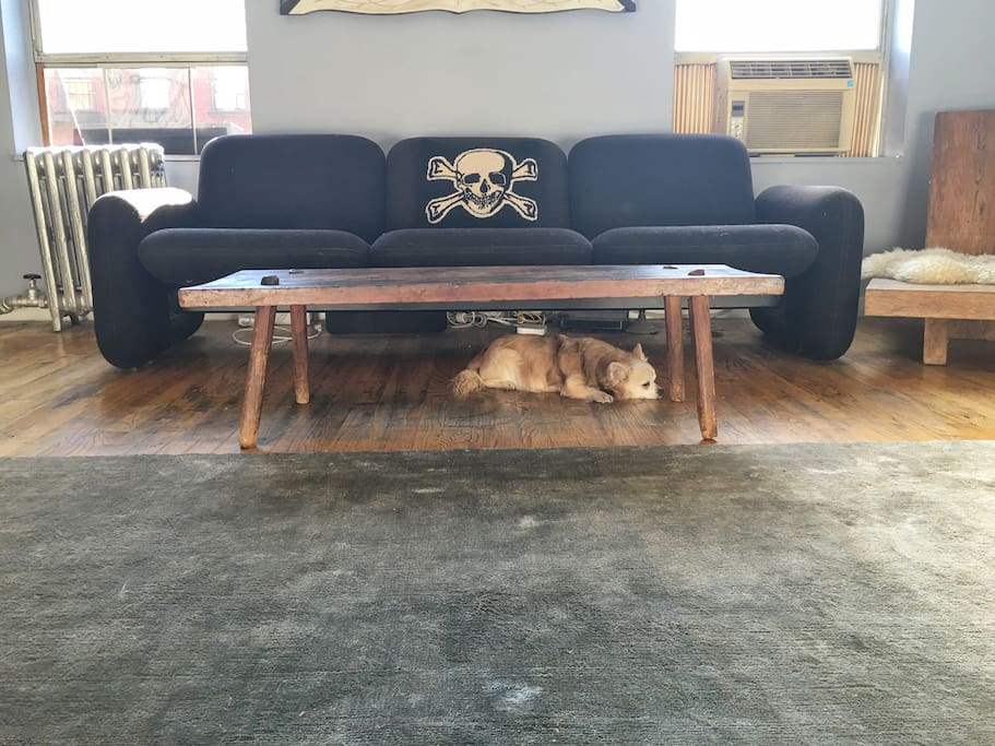 Living room has an open feel ... dog not included.