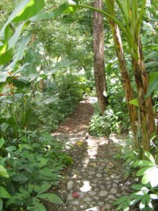 Buena Vista's Tropical Gardens and Nature Trails