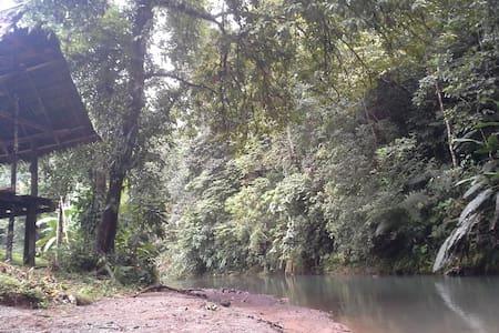 Tamandua Biological Station