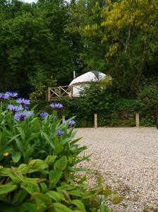 Moonbeam Yurt, Okehampton, Devon - Yurt