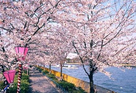 Beautiful location!(桜&川ビーチ&祭り&大阪城)